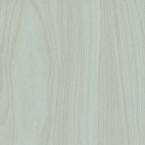 H60 Beyaz Akçaağaç
